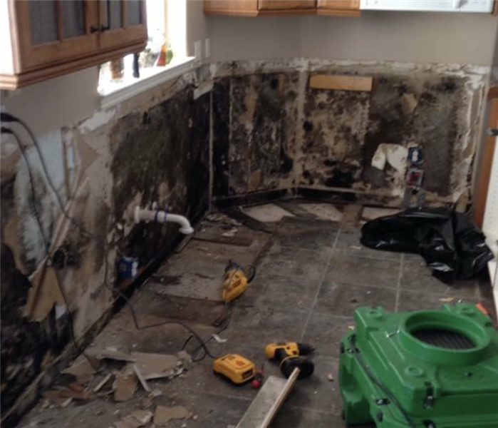 Kitchen Mold Damage in West Jordan, Utah Before