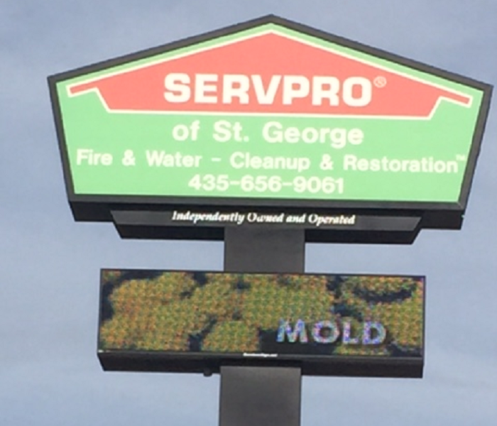 We Are Mold Experts