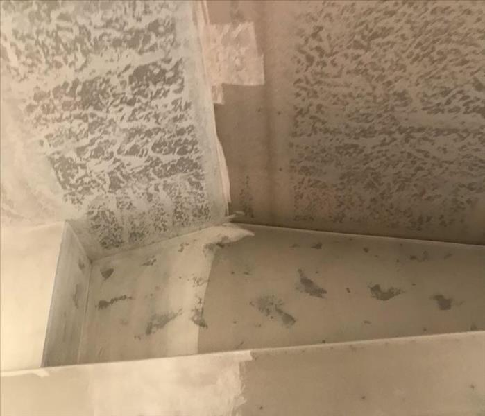Mold inspection in Salt Lake City.