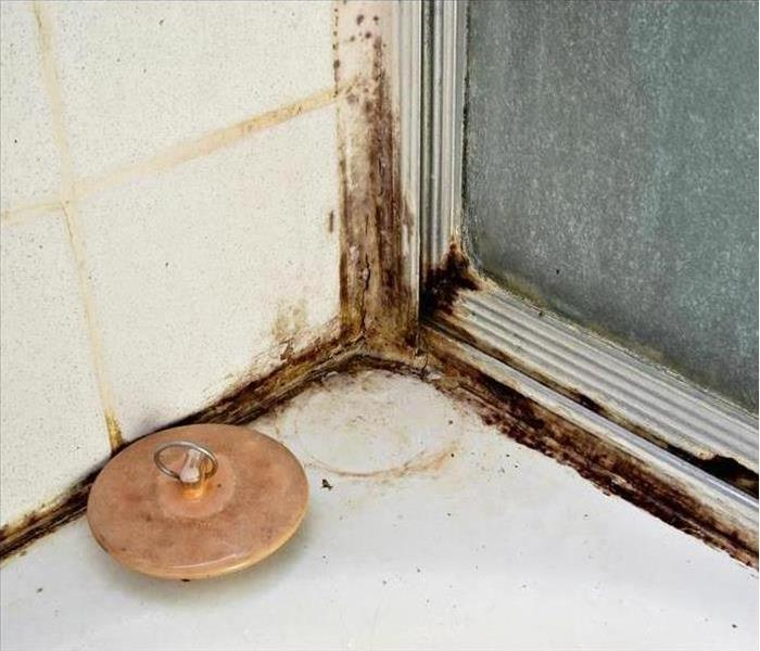 Mold Remediation Utah Homeowners Should Take Mold Detection Seriously