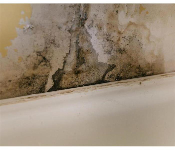 Mold growth on wall. Wall warping due to mold growth