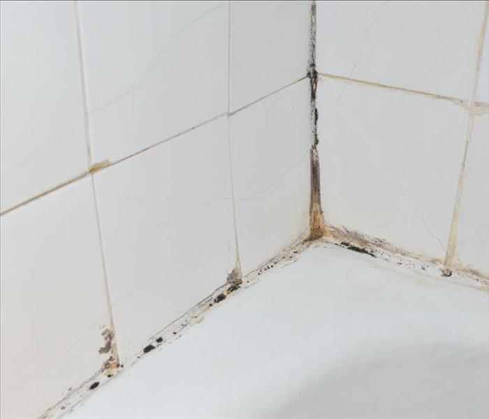 Bathroom tiles covered with black mold