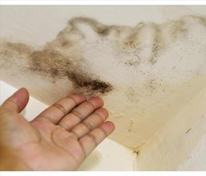 Why SERVPRO Ceiling Tile Discoloration: Culprits and Causes