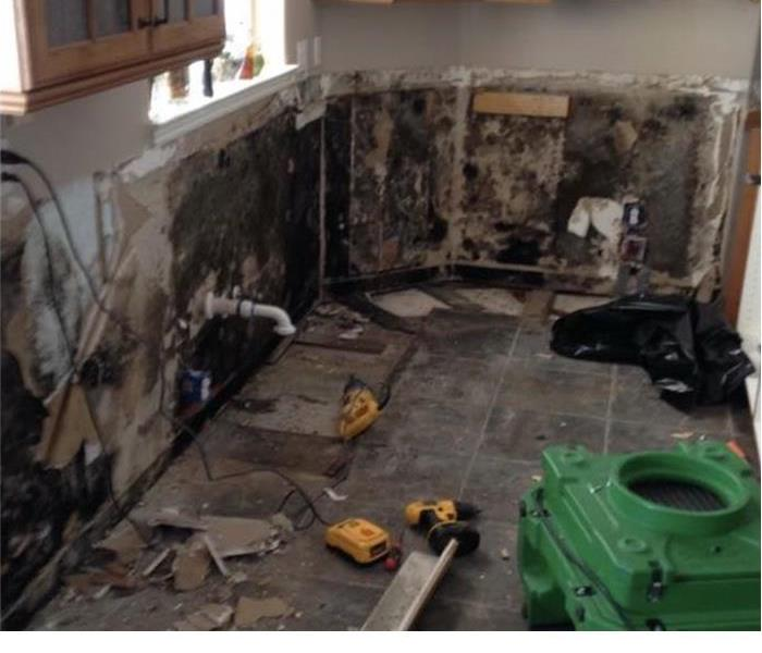 Mold Remediation How Big Is Too Big: When To Call a Mold Remediation Specialist