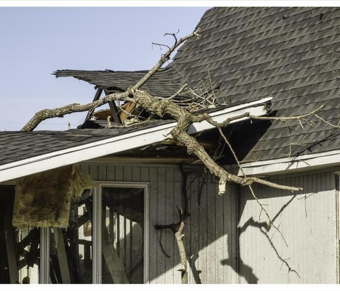 Tree limbs on roof